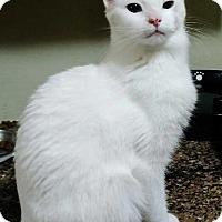 Adopt A Pet :: Paradise - Dallas, TX