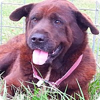 Adopt A Pet :: Michelle - Simsbury, CT