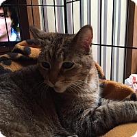 Adopt A Pet :: Trixy - Caro, MI