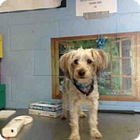 Terrier (Unknown Type, Small) Mix Dog for adoption in San Bernardino, California - URGENT on 4/22 SAN BERNARDINO