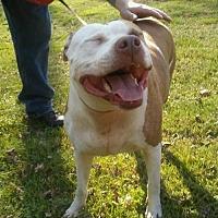 Adopt A Pet :: Jersey - New Castle, DE