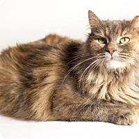 Adopt A Pet :: Paprika - Kingston, ON