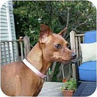 Adopt A Pet :: PEANUT - Springvale, ME