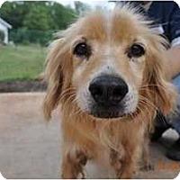 Adopt A Pet :: Benni - Raleigh, NC