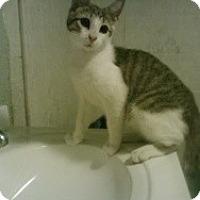 Adopt A Pet :: Wesley - bloomfield, NJ