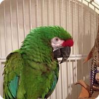 Adopt A Pet :: Fairy - Lexington, GA