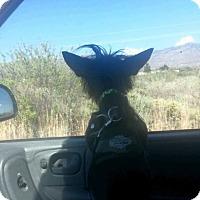 Adopt A Pet :: Fleaball - Alamogordo, NM
