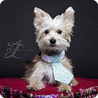 Adopt A Pet :: Lincoln - Baton Rouge, LA