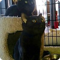 Adopt A Pet :: Sparkle - Horsham, PA