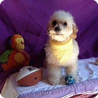 Adopt A Pet :: Rocky - San Diego, CA