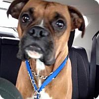Adopt A Pet :: Cherokee - Great Bend, KS