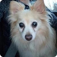 Adopt A Pet :: LInzer - Staten Island, NY