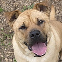 Adopt A Pet :: Patches - Martinsville, IN