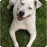 Adopt A Pet :: Holly - Chicago, IL