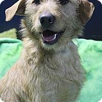 Adopt A Pet :: Tippy - Wytheville, VA