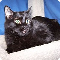 Adopt A Pet :: K-Skye2-Ninja - Colorado Springs, CO