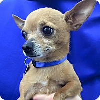 Adopt A Pet :: Nugget - Lake Elsinore, CA