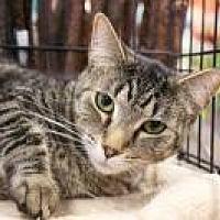 Adopt A Pet :: Lizzie - CP - Bruce Township, MI