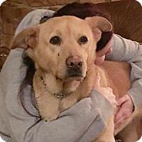 Adopt A Pet :: Astrid - Grand Rapids, MI