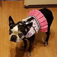 Adopt A Pet :: Cassie - Huntington Beach, CA