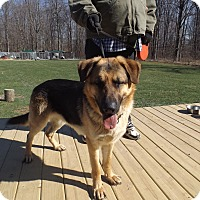 Adopt A Pet :: Radar - Quincy, IN
