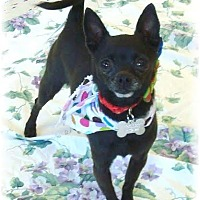 Adopt A Pet :: Squirt bonded with Little Bit - Las Vegas, NV