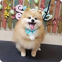 Adopt A Pet :: Sparky - Norman, OK