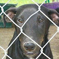 Adopt A Pet :: Tyrone - Mexia, TX