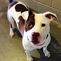 Adopt A Pet :: Bridget - Lake Odessa, MI