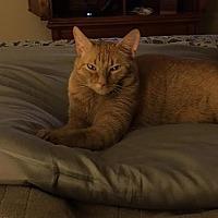 Adopt A Pet :: Mango - Fresno, CA