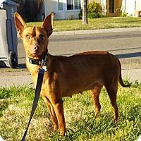 Adopt A Pet :: Fay - Chico, CA