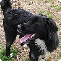 Adopt A Pet :: Sam - Destrehan, LA