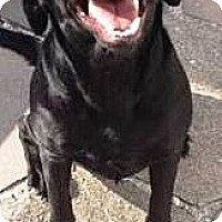 Adopt A Pet :: Roxy - Murdock, FL