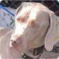 Adopt A Pet :: Capri **ADOPTED** - Eustis, FL