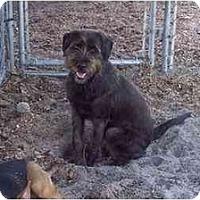 Adopt A Pet :: Charlie - Groveland, FL
