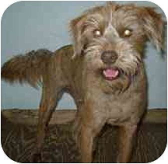 Terrier (Unknown Type, Medium)/Terrier (Unknown Type, Medium) Mix Dog for adoption in Dodge City, Kansas - Chewy