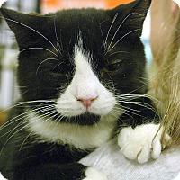Adopt A Pet :: Lele - Pittstown, NJ