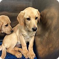 Adopt A Pet :: Manning - Cumming, GA