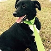 Adopt A Pet :: Tea Cup - Hatifeld, PA