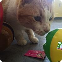 Adopt A Pet :: Cheeto - Shelbyville, KY