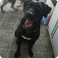 Adopt A Pet :: TC - Northumberland, ON
