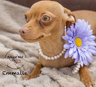Miniature Pinscher/Chihuahua Mix Dog for adoption in Inland Empire, California - EMMALIE