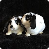 Adopt A Pet :: Melody & Lyric - Watauga, TX