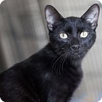 Adopt A Pet :: Ava - Prescott, AZ