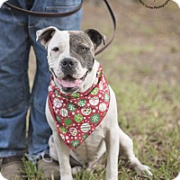 Adopt A Pet :: Rufus - Houston, TX