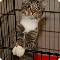 Adopt A Pet :: Andy (Neutered) - Marietta, OH