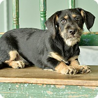 Adopt A Pet :: Tamale - San Antonio, TX