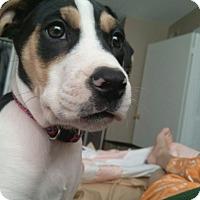 Adopt A Pet :: Ava (ETAA) - Plainfield, CT