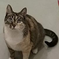 Adopt A Pet :: Cali - Amelia, OH