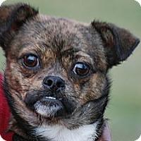Adopt A Pet :: Rascal - Providence, RI